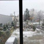 札幌ではようやく雪が降りました・・・