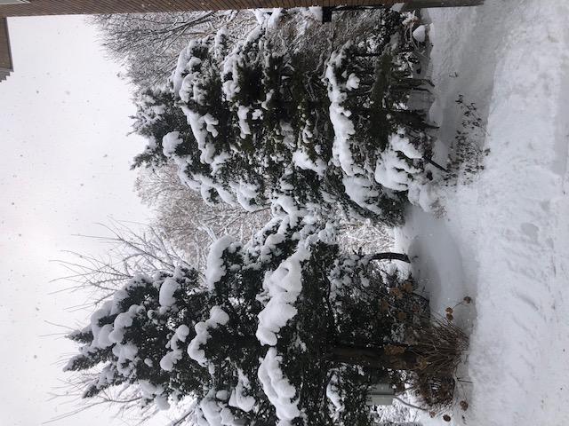 しんしんと降る雪の中、日々訪問診療しています。