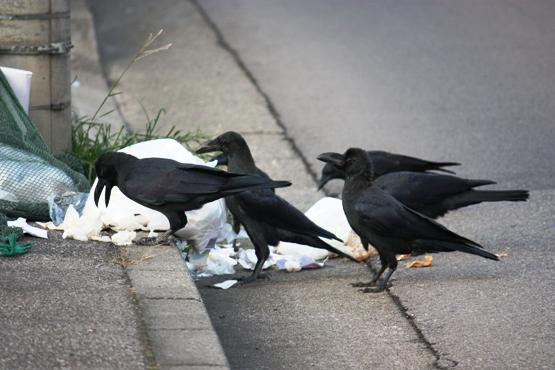 地域のごみ掃除をしていたら市役所に通報されたのですが・・・・今後は地域活動しない方がいいんでしょうか??